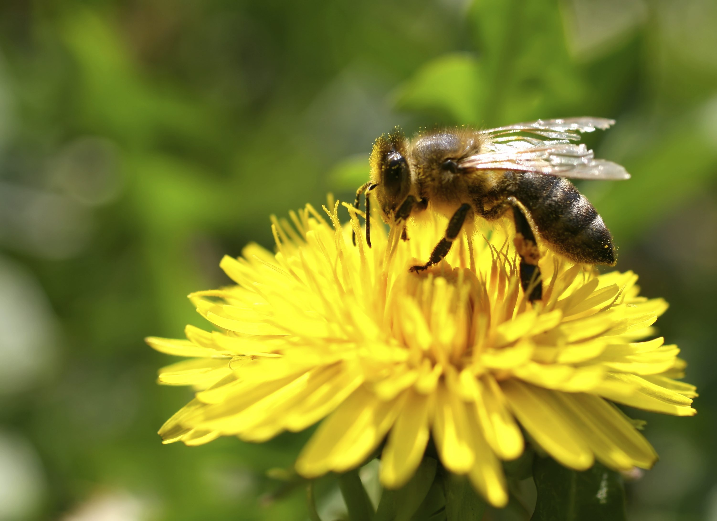 neonics and bees