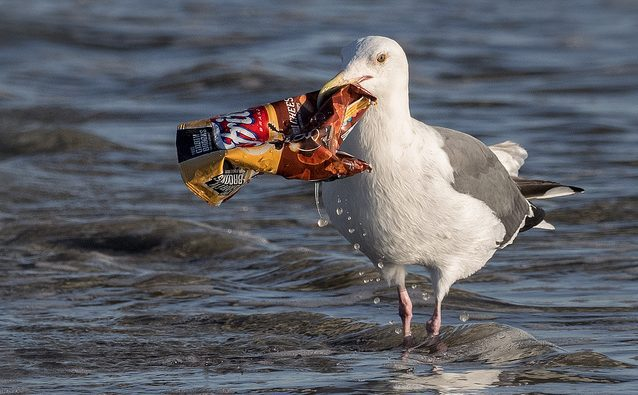 A seagul carries an empty chip bag in its beak