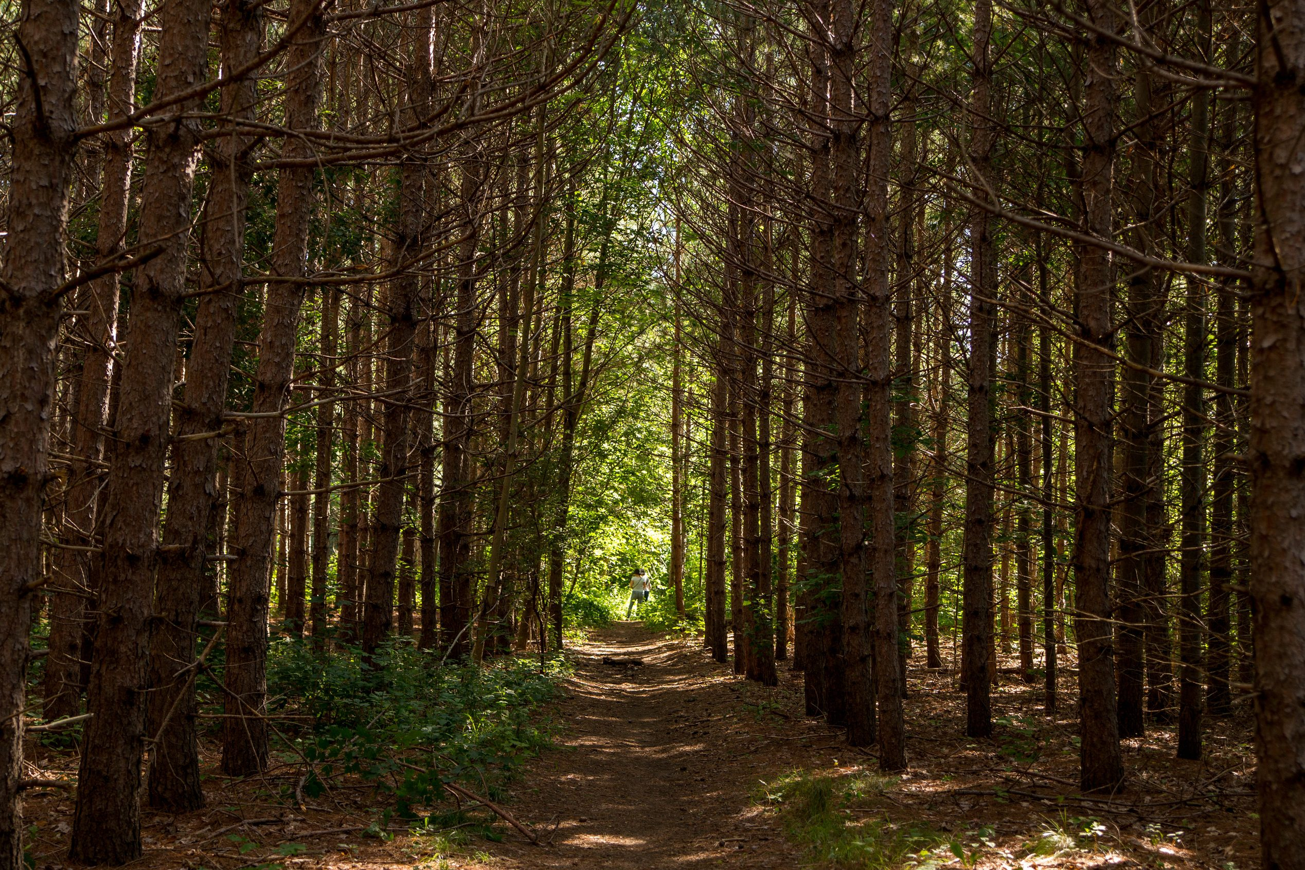 Highway 413 would pave over hiking and recreational trails along its path.